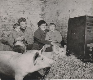 Stephen (sitting on mum Pauline's lap), younger brother David and dad Tony share their TV set with the pigs.